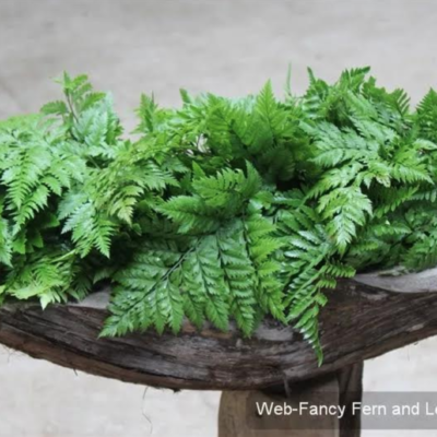 Fancy Fern and Leather leaf 8.95